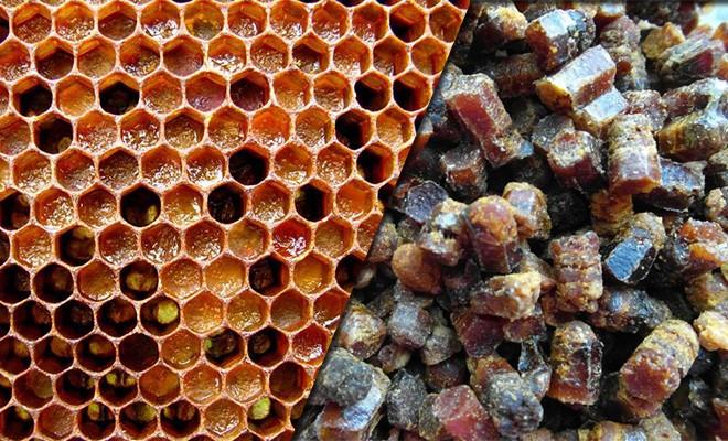 Продукт пчеловодства - перга: как ее применять. Целебный свойства перги. Чем полезна перга для женского здоровья.
