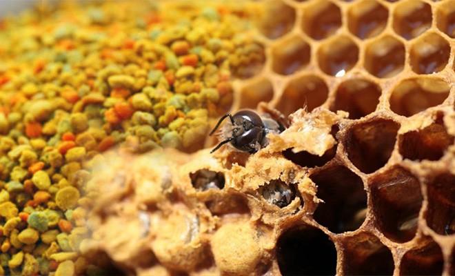 Чем так полезны перга и забрус для здоровья ваших зубов? Уникальный состав пчелиного забруса и перги.