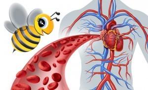 Помощь сосудам с помощью средства из пчелиного подмора