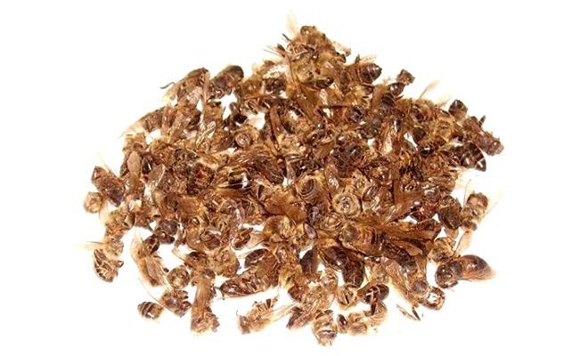 Полезные свойства пчелиного подмора и состав