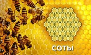 Медовые соты и их польза