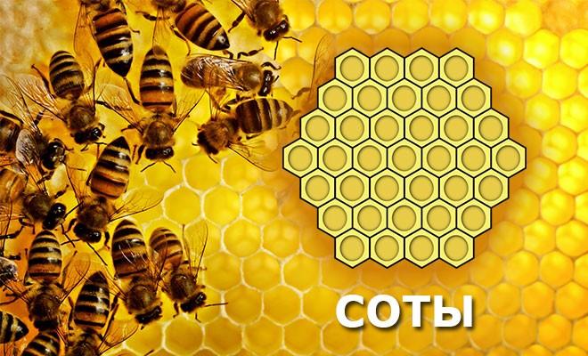 Уникальный состав медовых сот и их применение