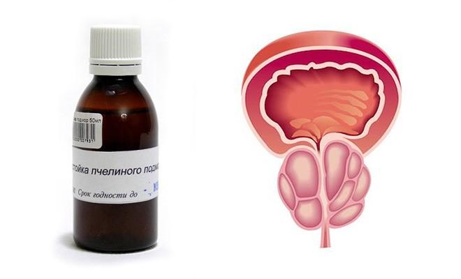 лечение простатита прополисом и пчелиным подмором