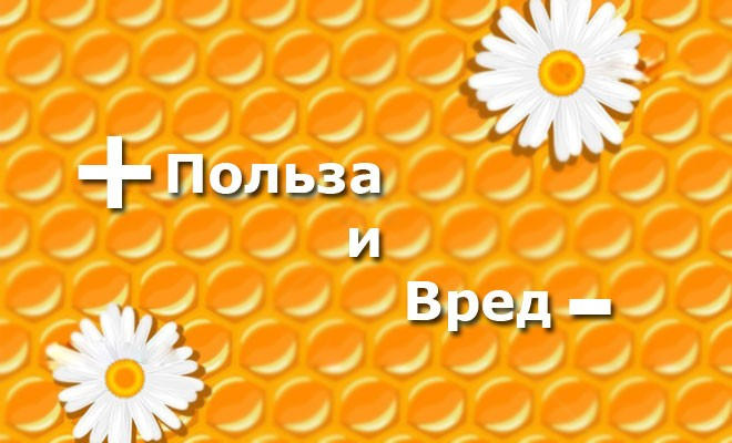 Что такое мед в сотах и в чем его польза? Вред при употреблении меда в сотах. Как правильно употреблять мед в сотах.