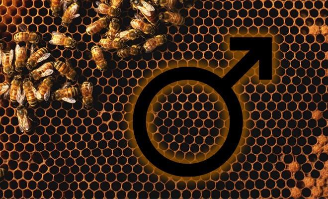 Применение пчелиной пыльцы мужчинами