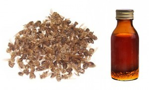 Лечение настойкой из пчелиного подмора. Как вылечиться благодаря настойки из пчелиного подмора.