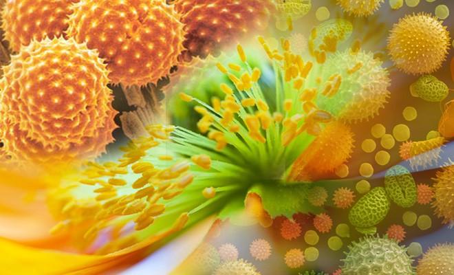 Пчелиная пыльца употреблять как