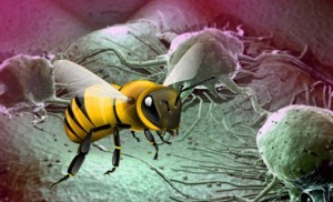 Лечение онкологичесикх заболеваний с помощью пчелиного подмора. Как вылечить полмором рак. Убиваем раковые клетки подмор пчел.