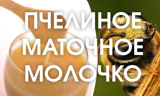 Пчелиное маточное молочко польза и вред