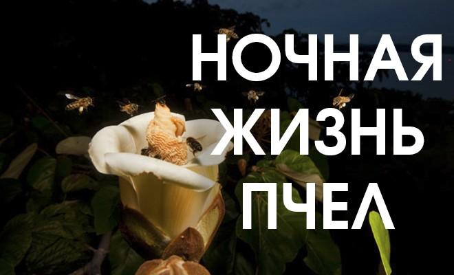 Особенности поведения пчел по ночам