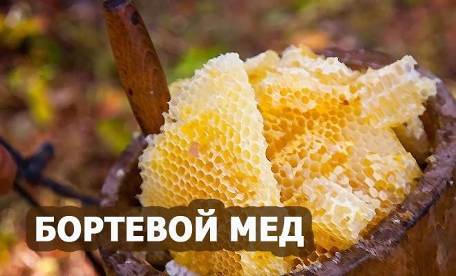 мед бортевой