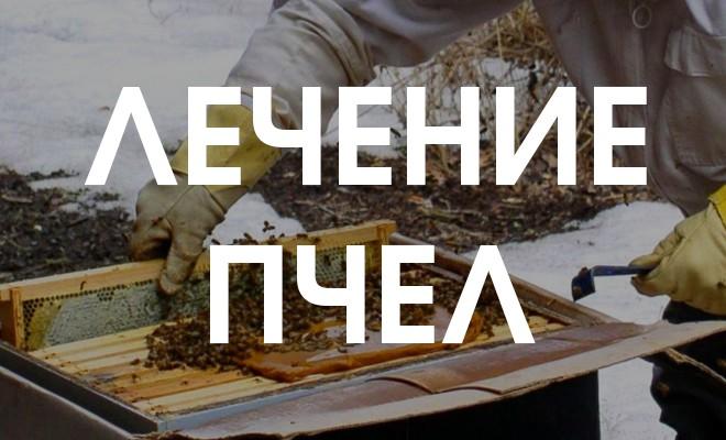 Лечение пчел - гнилец