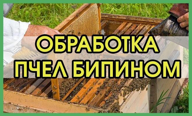 Обработка пчел бипином осенью