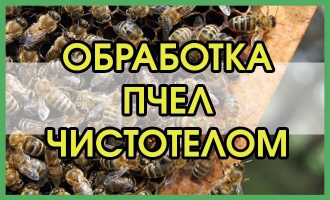 Обработка пчел чистотелом