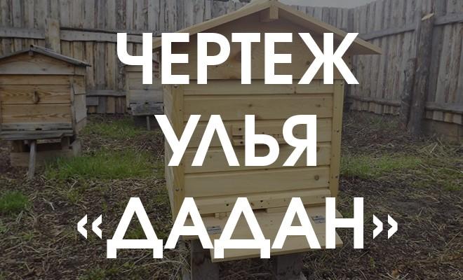 чертеж улья Дадан - 12 рамок