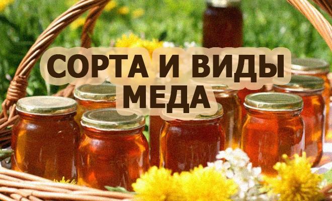 сорта и виды меда