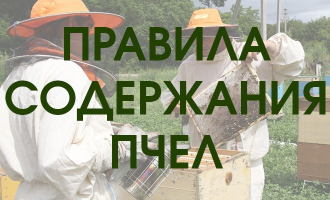 Правила содержания пчел в населенных пунктах - что нужно знать?