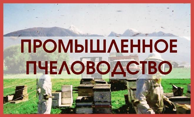 Промышленное производство меда