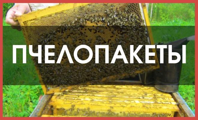 Пчелопакеты своими руками