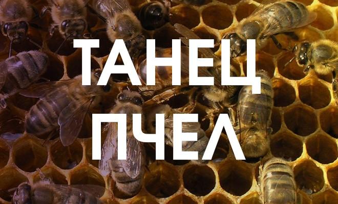 Танец пчел