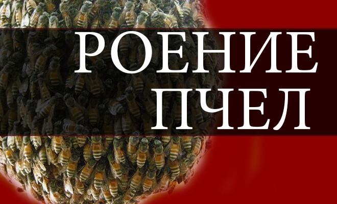 Что сделать чтобы пчелы не роились Своими руками - Как сделать самому 79