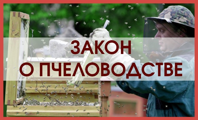 Новый закон РФ о меде, пчеловодстве и содержании пасек