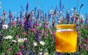 мед луговой полезные свойства