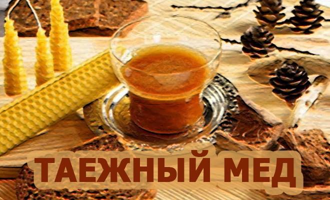 мед таежный