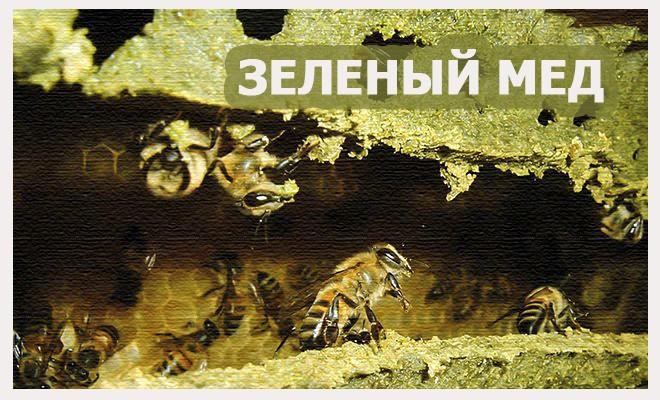 мед зеленого цвета