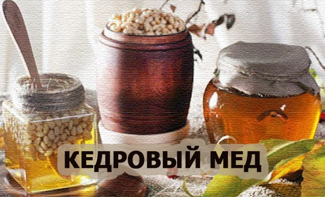мед кедровый