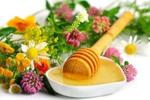 полевой мед цветочный