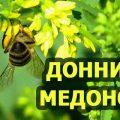 донник медонос