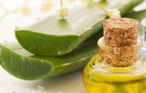 рецепт алоэ с медом для желудка