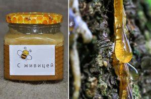 мед с живицей полезные свойства и противопоказания
