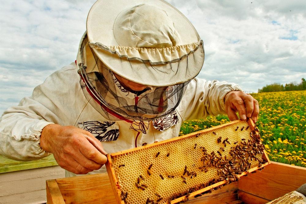 Как работать с пчелами