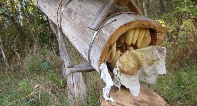 Колода для пчел своими руками