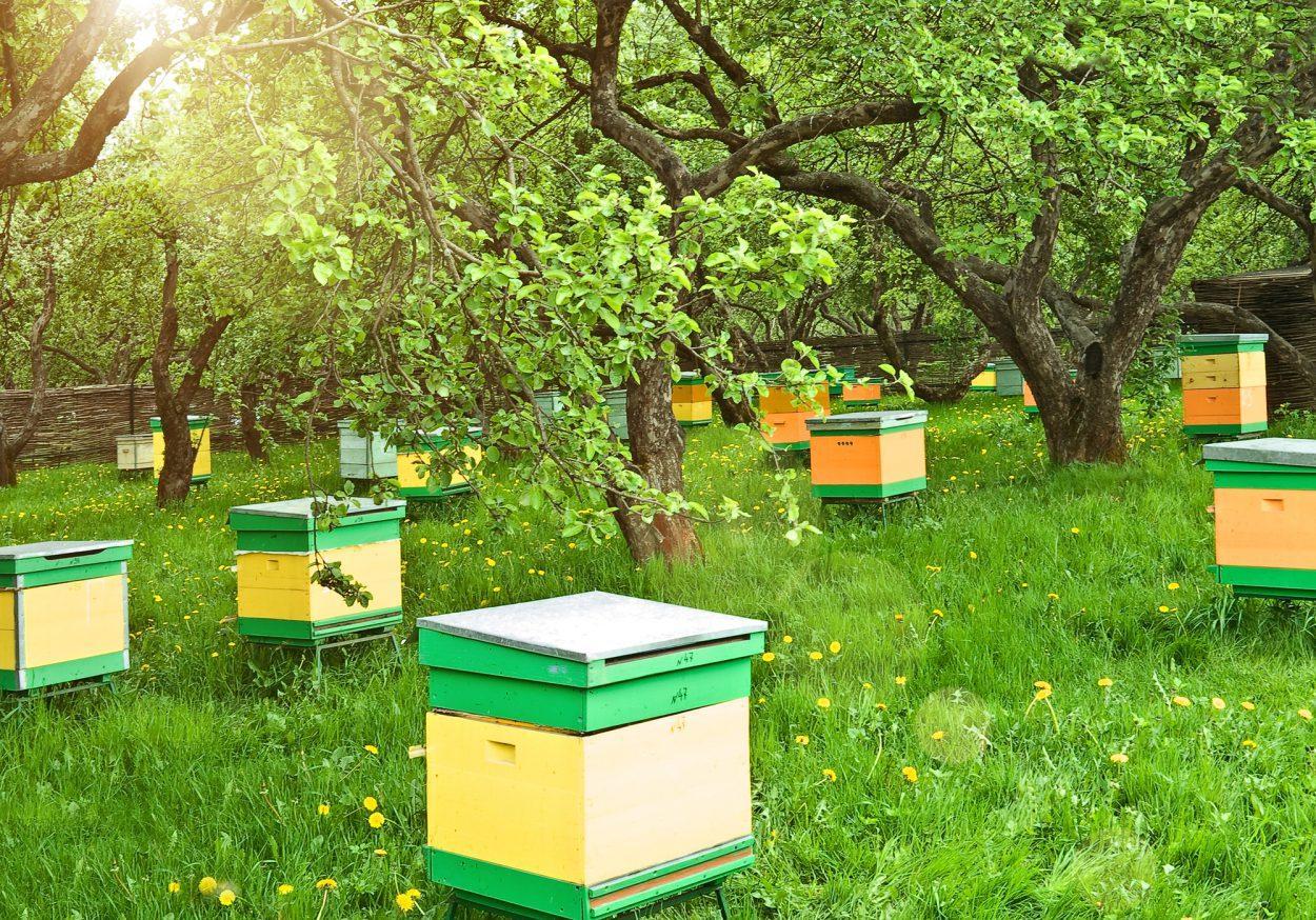 Правила разведения пчел в населенном пункте