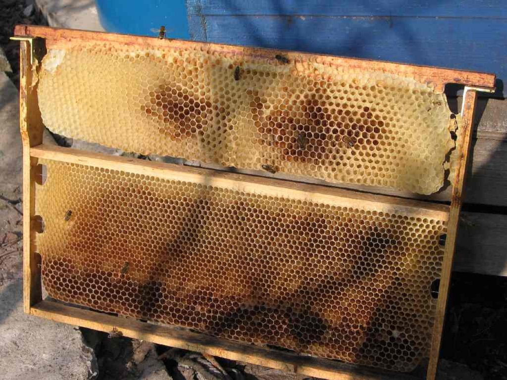 Строительная рамка в пчеловодстве
