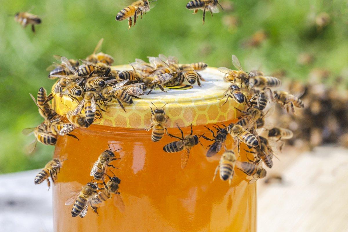 Как правильно выбирать пчел