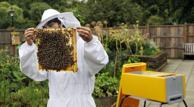 Особенности ротационного разведения пчел
