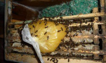 Канди для пчел своими руками