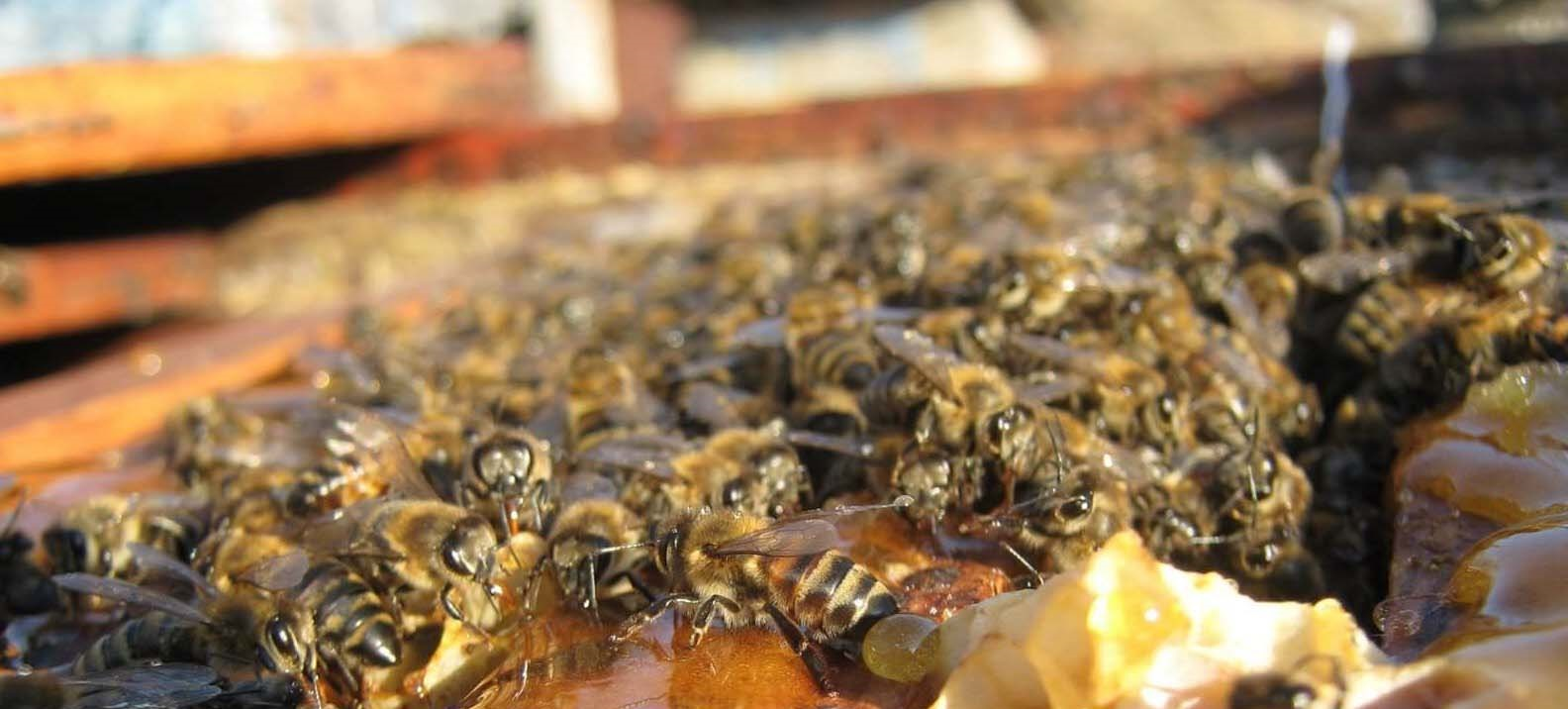 Как подкармливать пчел