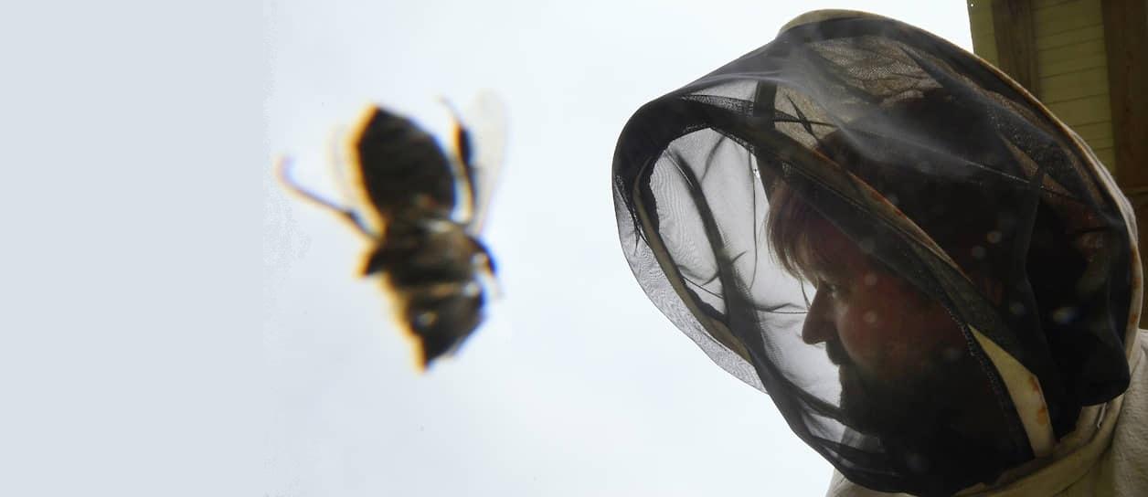 Содержание пчел в улье