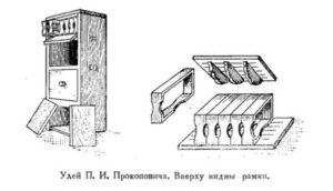 Улей Прокоповича