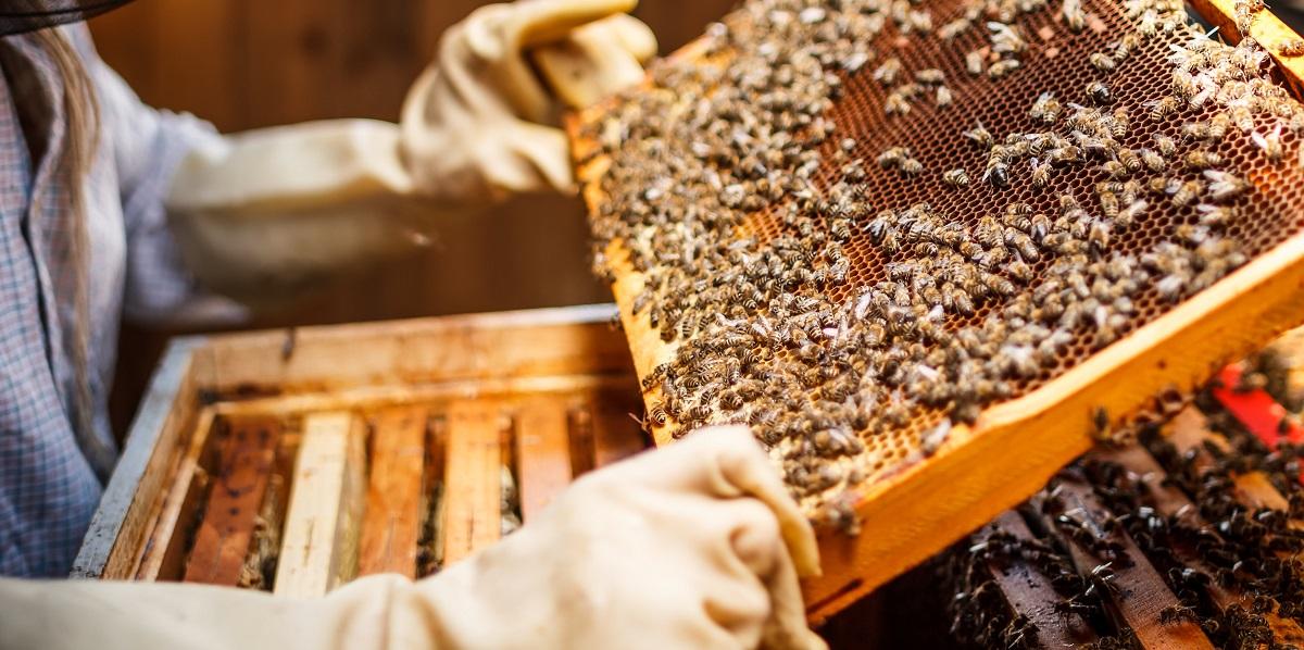 За сотни лет в пчеловодстве появилось множество специфических терминов и определений