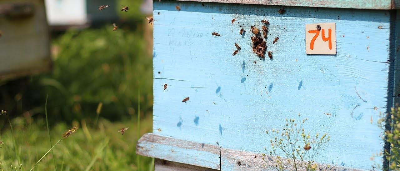 Врагов у пчел предостаточно