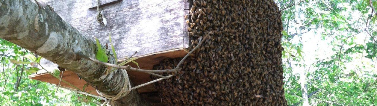 Ловушка для пчел своими руками