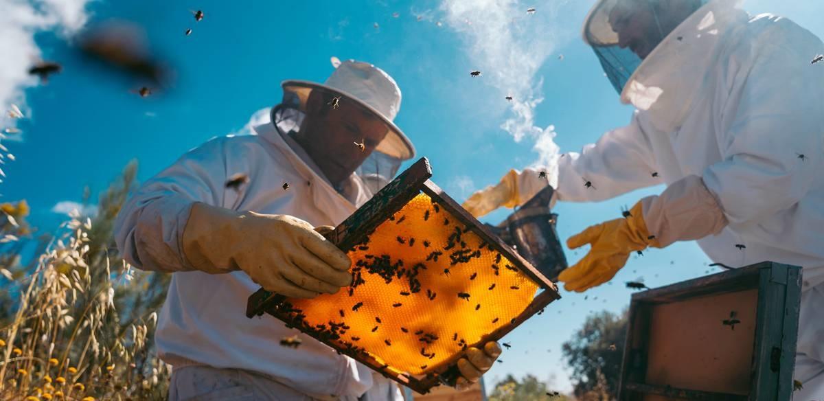 Уход за пчелами на пасеке