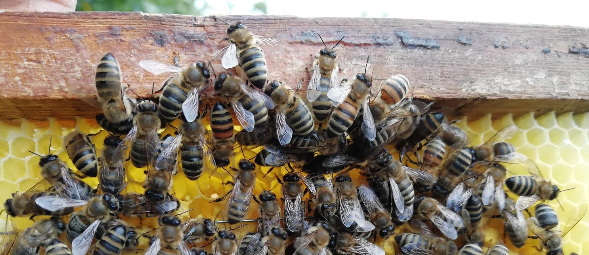 Простая ловушка для пчел